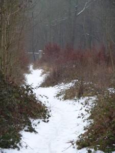 Le petit chemin qui entre dans le bois