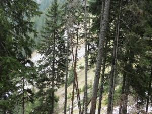 le trail des allobroges